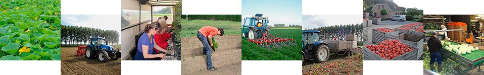 process van het planten tot en met het oogsten van de groenten